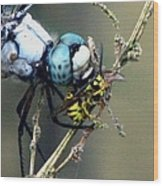 Dragonfly With Yellowjacket 4 Wood Print