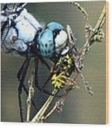 Dragonfly With Yellowjacket 5 Wood Print
