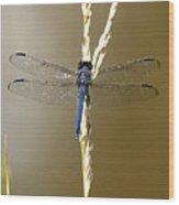 Dragonfly2 Wood Print