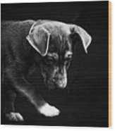 Dramatic Black And White Puppy Dog Wood Print