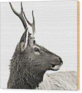 Dramatic Deer Wood Print