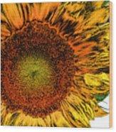 Dramatic Sunflower Wood Print
