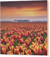 Dramatic Tulips Wood Print