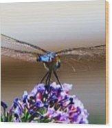 Drangonfly On A Purple Flower Wood Print