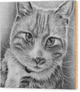 Drawing Of A Cat In Black And White Wood Print