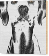 Drawing Of A Dalmatian Dog Wood Print
