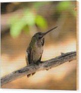 Dream Hummingbird Wood Print