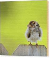 Dream Sparrow Wood Print