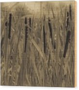 Dreaming Of Cattails Wood Print