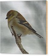 Dreaming Of Spring - American Goldfinch Wood Print