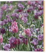 Dreaming Of Tulips Wood Print
