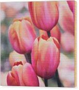 Dreaming Tulips Wood Print