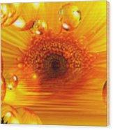 Dreams 2 - Gerbera Sunrise Wood Print