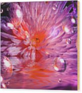 Dreams 3 Chrysanthemum Wood Print