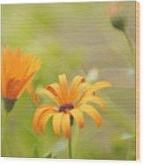 Dreams Of Orange Symphony In Spring  Wood Print