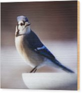 Dreamy Blue Jay Wood Print