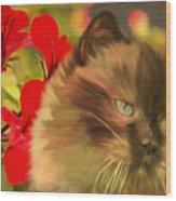 Dreamy Cat With Geranium 2015 Wood Print