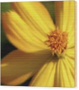 Dreamy Coreopsis Wood Print