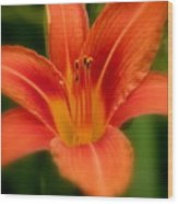 Dreamy Day Lily Wood Print