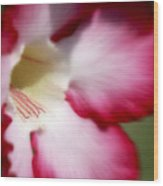 Dreamy Desert Rose Wood Print