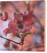 Dreamy Dogwood Wood Print