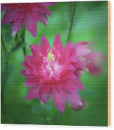 Dreamy Hot Pink Columbine Squared Wood Print