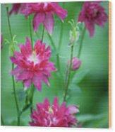 Dreamy Hot Pink Columbines Wood Print