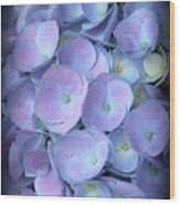 Dreamy Hydrangea In Purple And Blue  Wood Print
