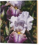 Dreamy Irises Wood Print