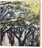 Dreamy Live Oaks Wood Print