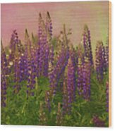 Dreamy Lupin Wood Print
