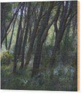 Dreamy Marjan Forest In Croatia Wood Print