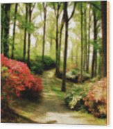 Dreamy Path Wood Print