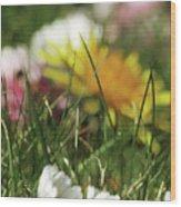 Dreamy Spring Wood Print