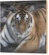 Dreamy Tiger Wood Print by Sandy Keeton