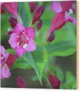 Dreamy Wigelia Wood Print