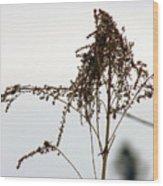 Dried Flower Wood Print