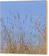 Dried Grass Blue Sky Wood Print