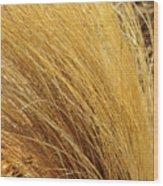 Dried Grass Wood Print