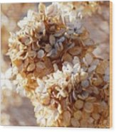 Dried Hydrangea Flowers  Wood Print