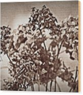Dried Hydrangeas Wood Print