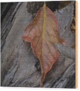 Dried Leaf On Log Wood Print