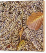 Dried Leaf On The Fern Wood Print