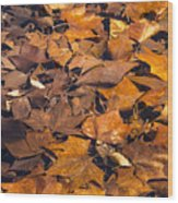 Dried Leaves Wood Print