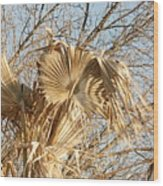 Dried Palm Fronds In The Wind Wood Print