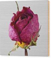 Dried Rose 4 Wood Print