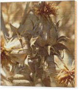 Dried Safflower Wood Print