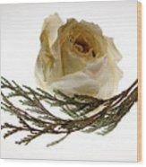 Dried White Rose Wood Print
