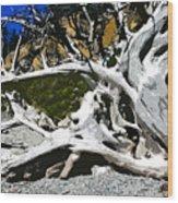 Drift Wood Wood Print