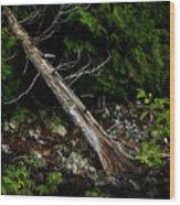 Drifted Tree Wood Print